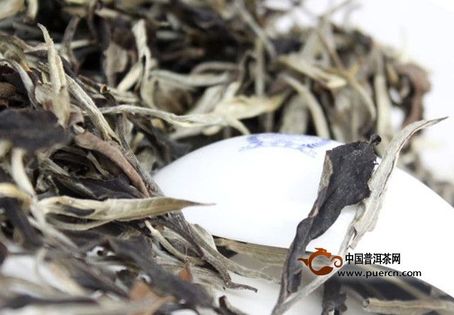 2019年云南普洱春茶上市时间
