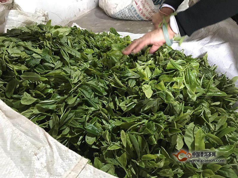 2019年无量山普洱春茶价格