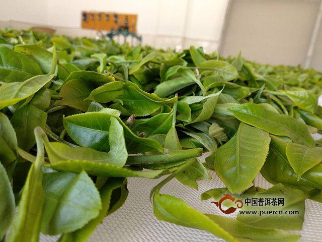 2019年小户赛茶多少钱一斤