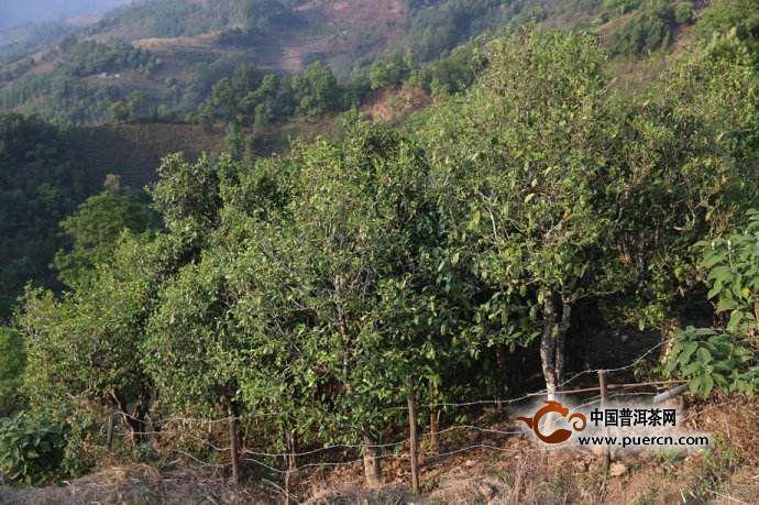 天门山高杆古树多少钱